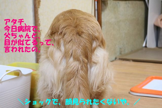 IMG_1199.jpg