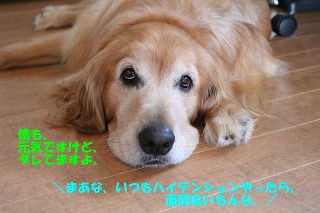 IMG_1593_2016082321485681d.jpg
