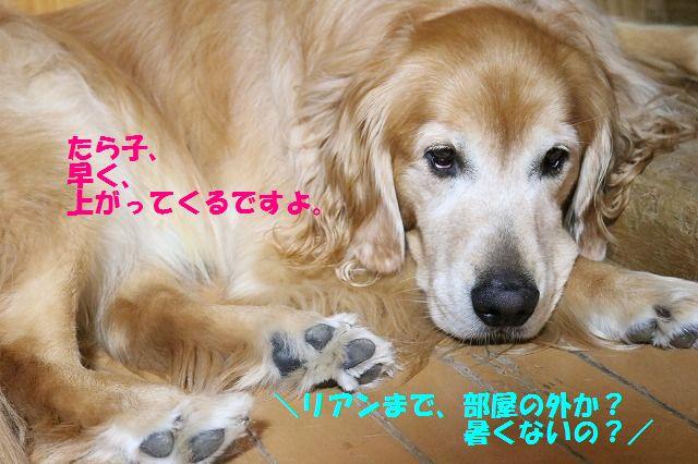 IMG_1654_2016082423473262c.jpg
