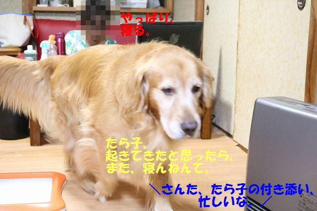 IMG_2028_20160829224938753.jpg