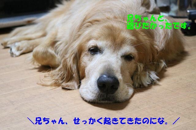 IMG_2274.jpg