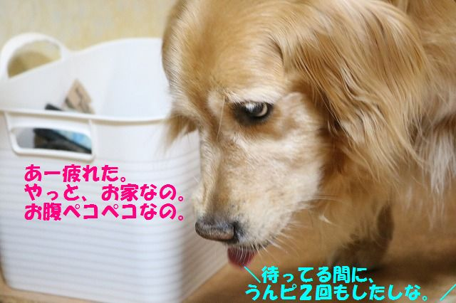 IMG_2391.jpg