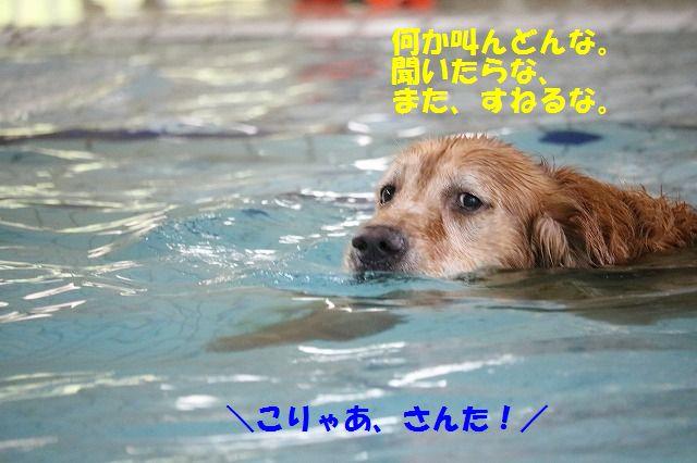IMG_2629_2016090520071048a.jpg