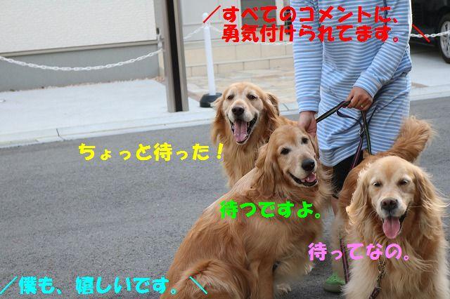 IMG_3234.jpg