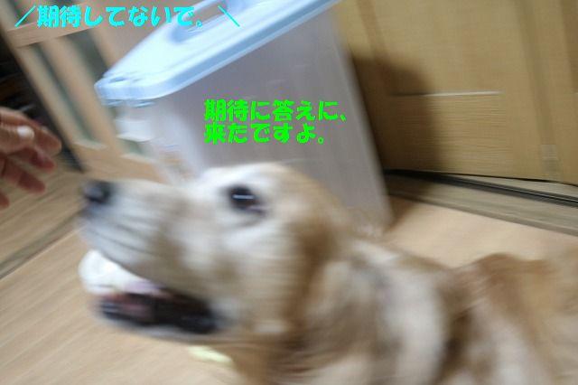 IMG_3339_20160914205247d59.jpg