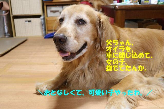 IMG_3539_20160916235601919.jpg