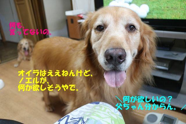 IMG_3603_2016091819432679b.jpg