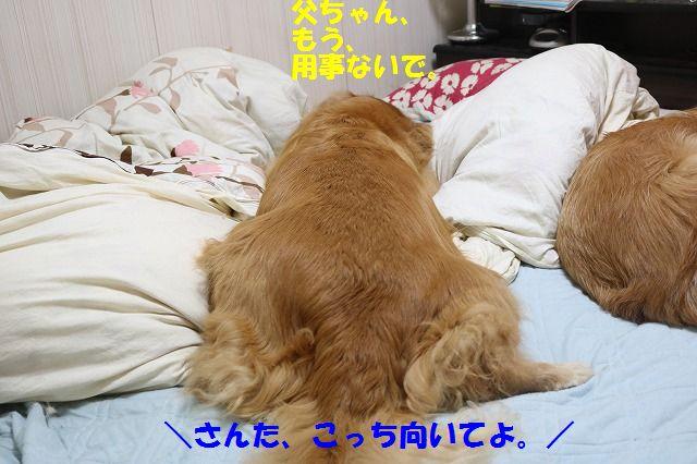IMG_3638.jpg
