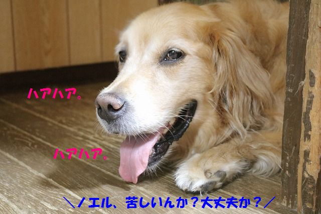 IMG_3798.jpg