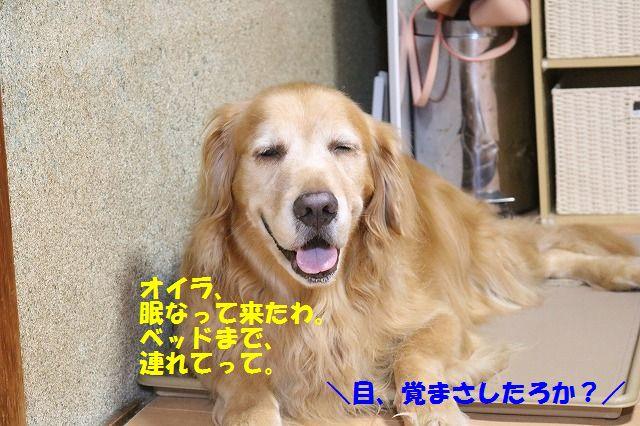 IMG_3850_201609212137467db.jpg