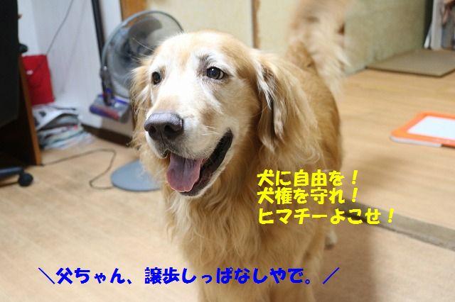 IMG_3892_201609212138126cc.jpg