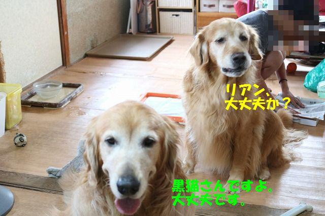 IMG_3954_20160922222006def.jpg