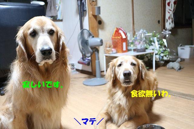 IMG_4096_201609292050049c4.jpg