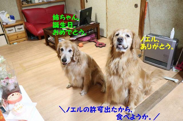 IMG_4475.jpg