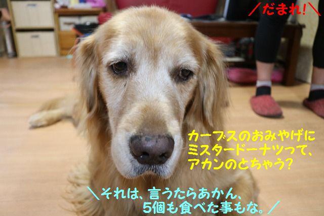 IMG_5488_20161013202144d87.jpg
