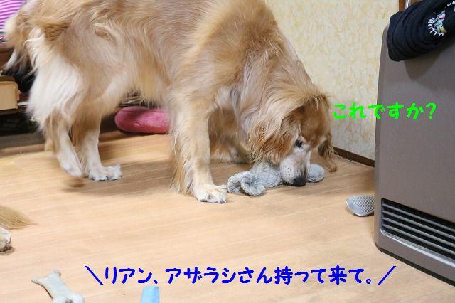IMG_5494_20161014195731ab4.jpg