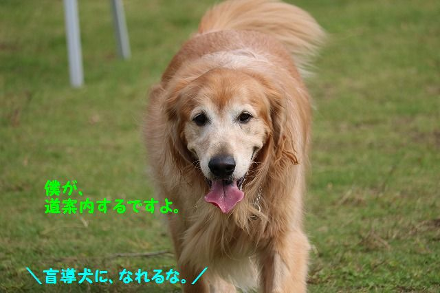 IMG_5747_20161016230235e9a.jpg