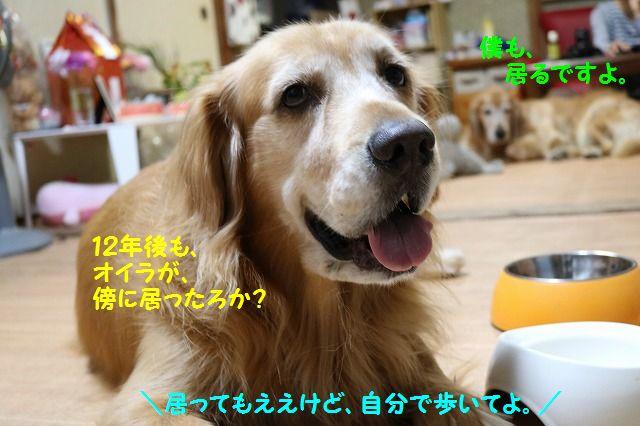 IMG_5998_201610202025494cb.jpg