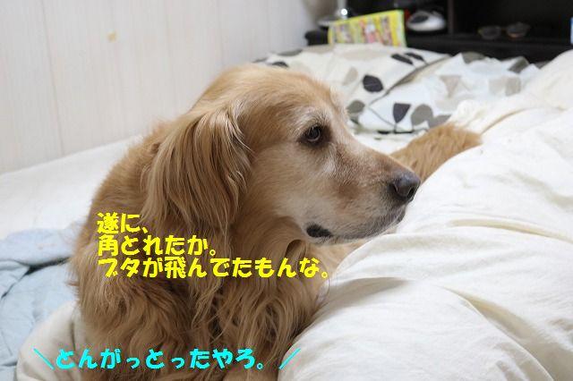 IMG_9570.jpg