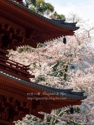 久遠寺の枝垂れ桜 G