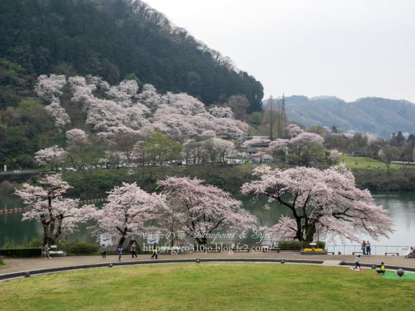 津久井湖の桜 I