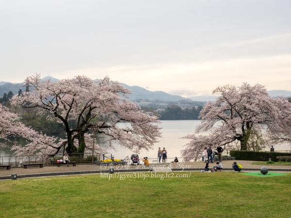 津久井湖の桜 J