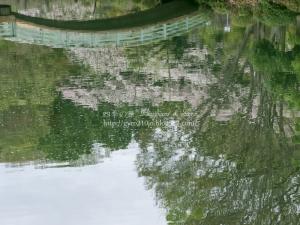 薬師池公園 C