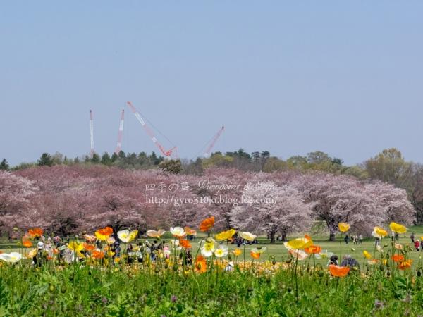 昭和記念公園 I