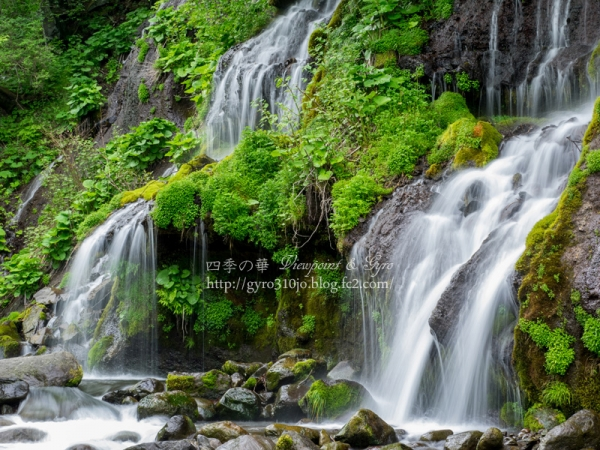 吐竜の滝 D