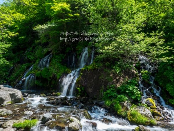 吐竜の滝 C