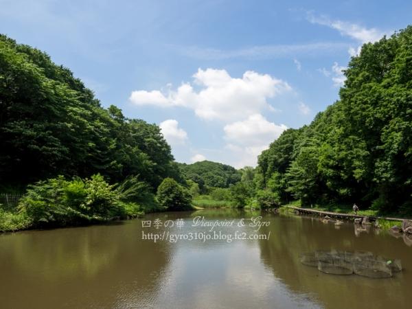四季の森公園 R