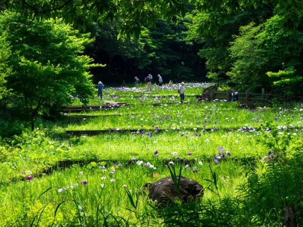四季の森公園 A