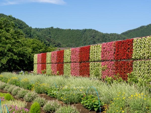 花の都公園 J