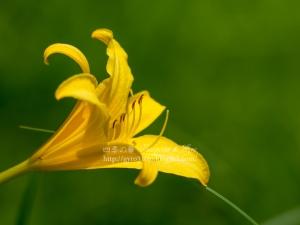 箱根湿生花園 F