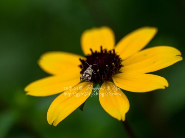 夏の花 J