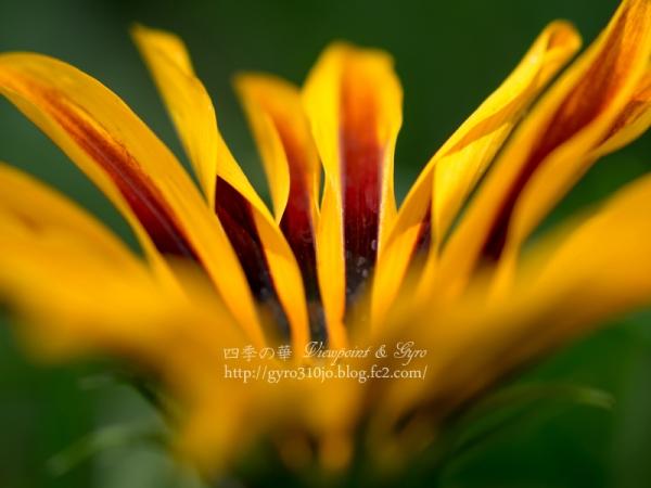 夏の花 M