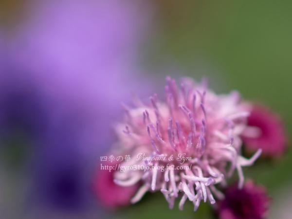 夏の花 N