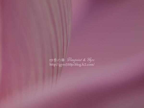 蓮の花 B