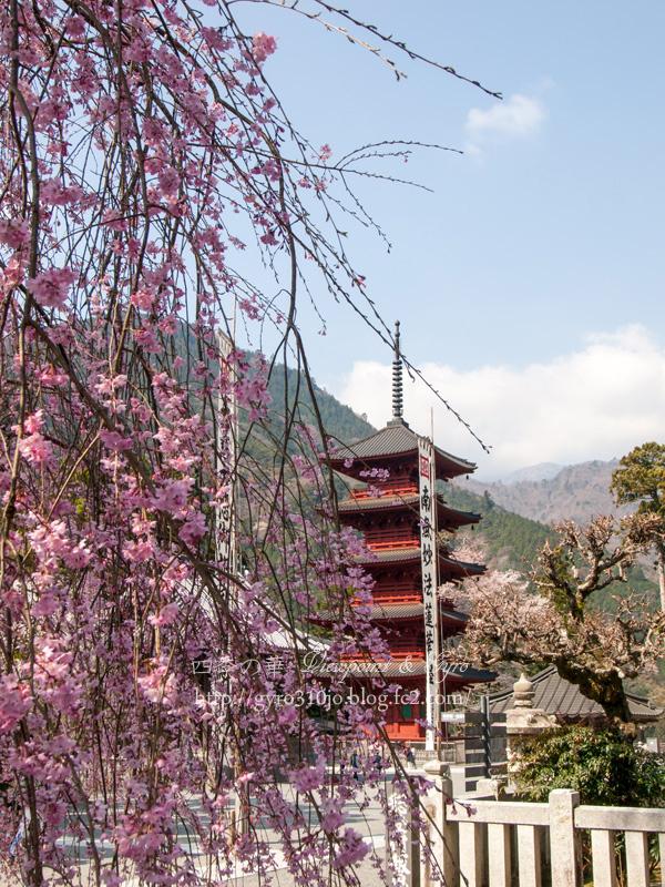 久遠寺の枝垂れ桜 F