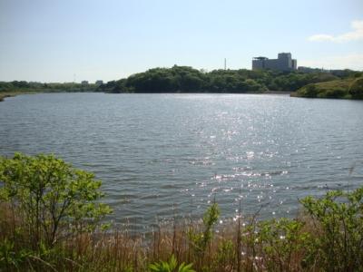 春採湖 002