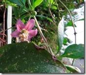 160908022 クコの花