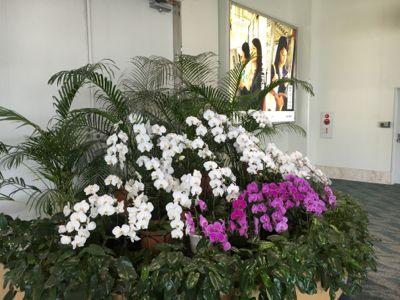 那覇空港 国内線ターミナル内は花爛漫です