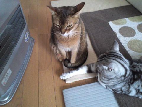 暖をとる。