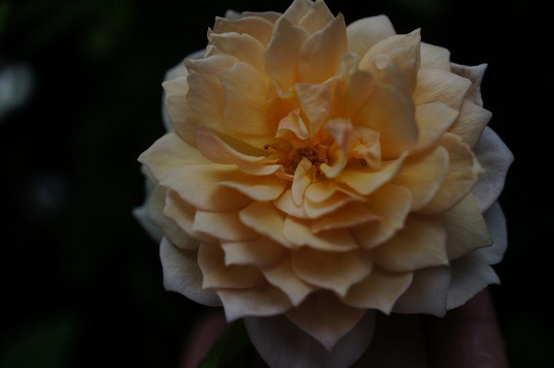 s-黄色のER (2)
