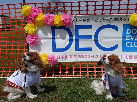 DSC01768.jpg