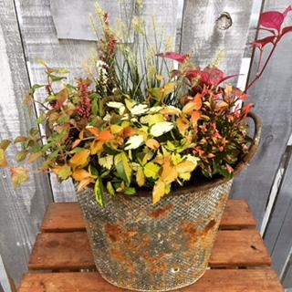 秋色寄せ植え