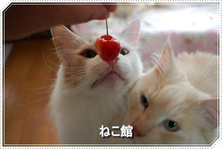 blog10_20160531205843484.jpg