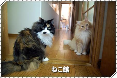 blog13_201606041332579f8.jpg