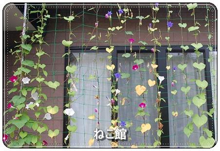 blog19_201607290721076a1.jpg