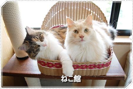 blog4_2016060818465667c.jpg